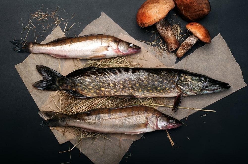 yak-pravylno-vybraty-rybu-na-shho-zvernuty-uvagu-2