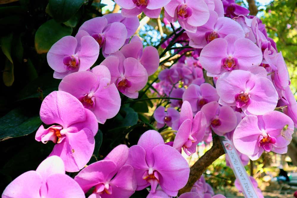 yak-doglyadaty-za-orhideyeyu-top-8-pravyl